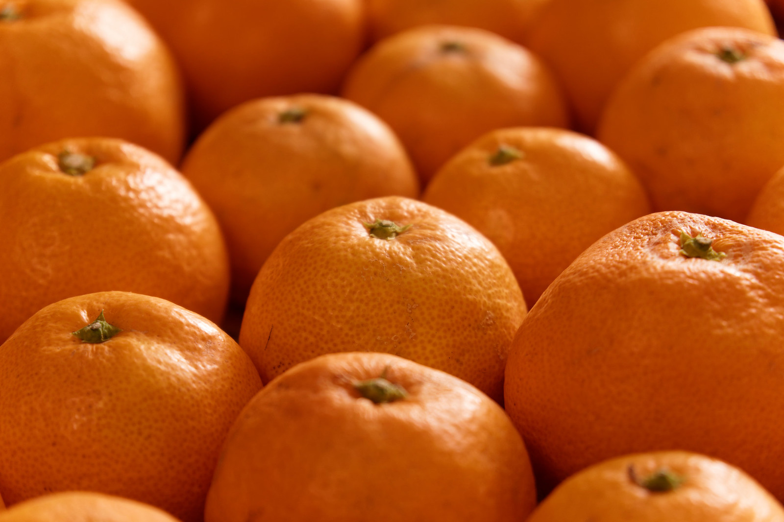 Japanese Mikan