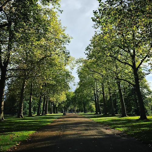 Hyde Park Autumn Sun