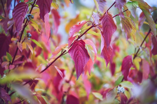 Pink   Autumn Colors