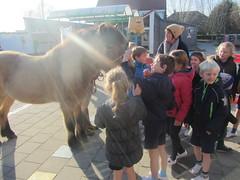 16.12.06 Paarden op bezoek HH