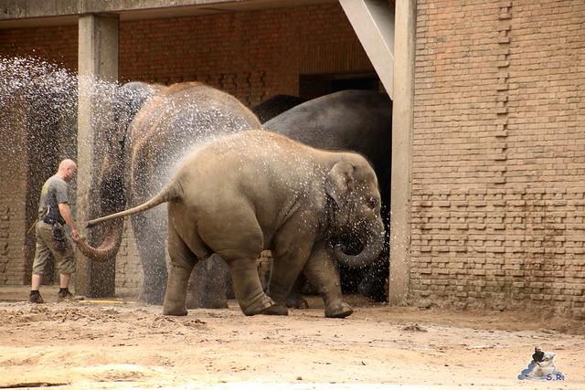 Zoo Berlin 14.08.2015  083