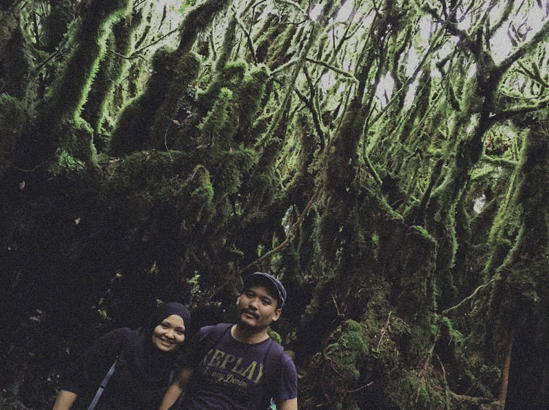 mount irau mossy forest (8)
