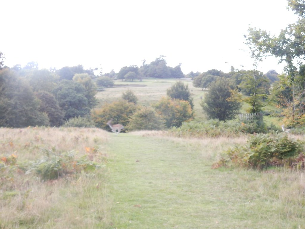Knole view with deer Borough Green to Sevenoaks