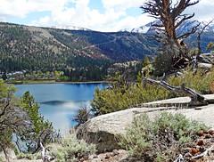 June Lake, High Sierra, CA 5-15
