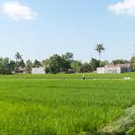Campos de arroz en Yogjakarta