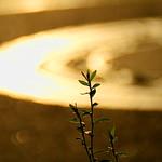 7. September 2015 - 17:33 - Zwischen der Bordsteinkante und dem Gehweg wachsen kleine Plflanzen, trotz der wideren Umstände, die ihr Leben mit sich bringt. Sie trotzen Gift, sie überleben es überfahren und umgetreten zu werden und richten sich immer wieder auf, egal was das Leben ihnen bringt... weil es schöne Momente gibt... :)  Meastro on Youtube: www.youtube.com/channel/UCz1p_WgQ23DPHjEfXH8mmYQ Meastro on Facebook: www.facebook.com/Meastrop?ref=bookmarks