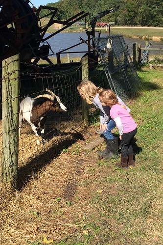 Making friends with a goat.
