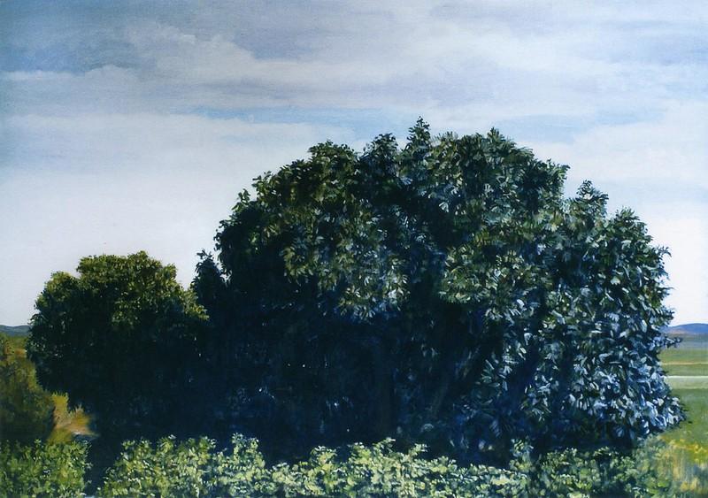Figuier, Fouscaïs, 114 x 162 cm, 2006