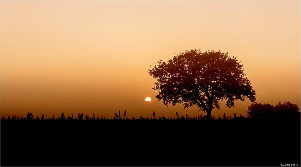 Un soir, un arbre.... 22786694241_4f2c06df5f_b