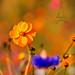 Parce qu'il ne faut pas oublier qu'après l'hivers le printemps revient toujours... Même si l'hivers est très rude !!! by henrychristo27 (Christophe)