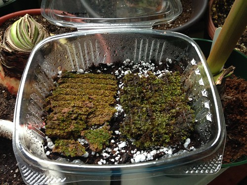 Moss growing experiment