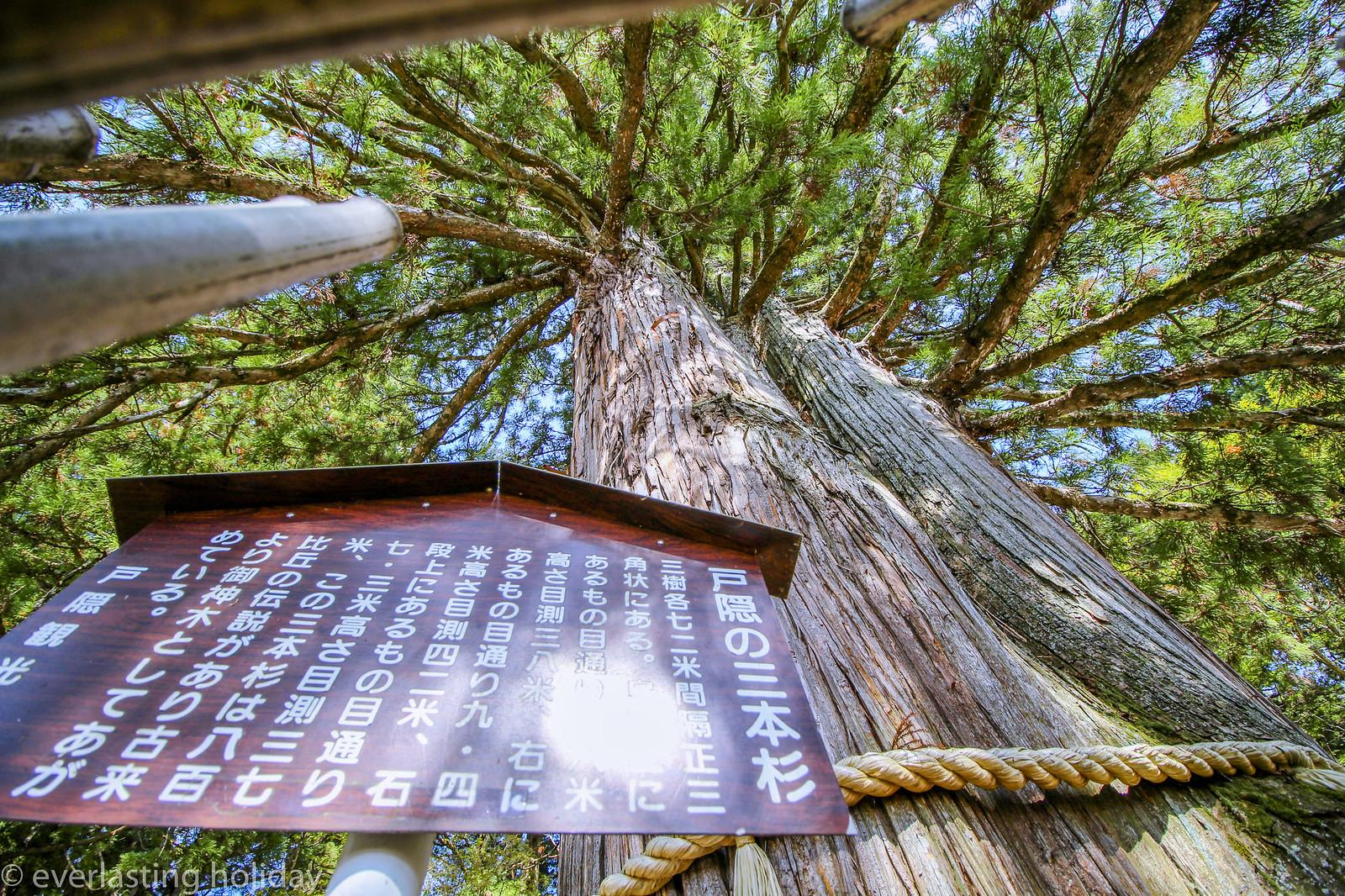戸隠神社 Togakushi-jinja Shrine-0008