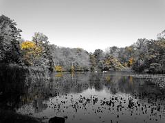 Mill Pond Park -- Autumn (21)