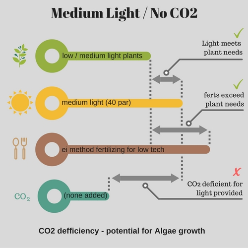 Planted Aquarium Diagram - Medium Light with No CO2