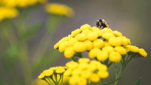 2015 08 01 Bee