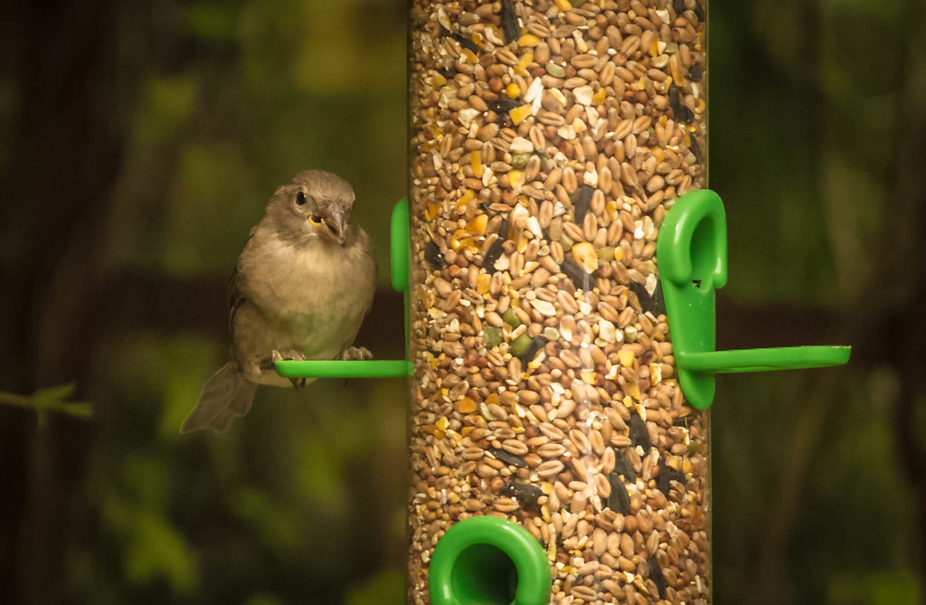 Billingham Birds