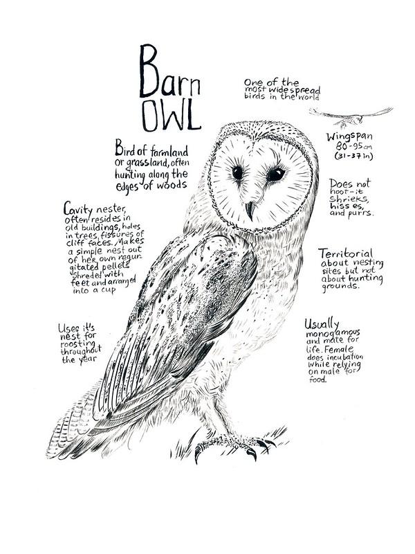 Owls_08_Barn