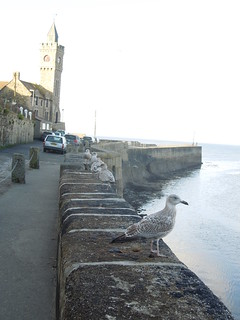 15 09 27 Day 23 1 Porthleven (3)