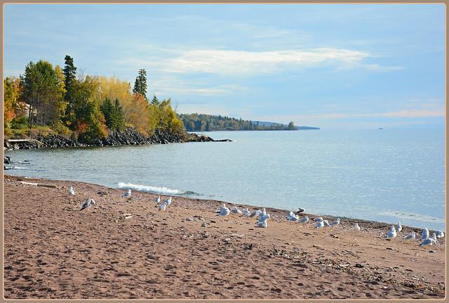 ~~~ Seagulling the Shoreline - I. ~~~