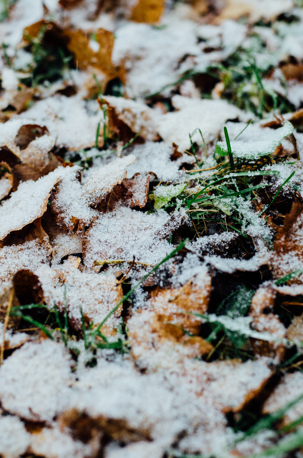 First Snow | October 28, 2015