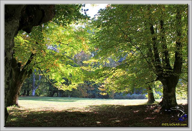 Hayedo de Presazelay (8)