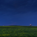 6. August 2015 - 12:37 - Lightning flashes in the distance over a canola field.   Near Kindersley, Saskatchewan August 2015