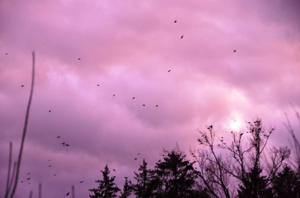 Crows over Feldbrunnen