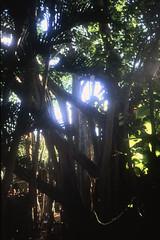 Bahamas 1988 (076) New Providence: Ardastra Gardens, Nassau