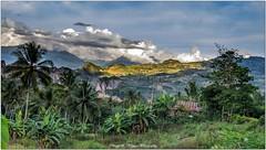 Les Sulawezi - Indonésie