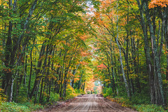 Autumn Dirt Road - Hiawatha National Forest, Michigan