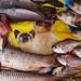 Cats and Fish - Yangon, Myanmar by Maciej Dakowicz