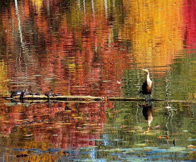 Bird and Turtles