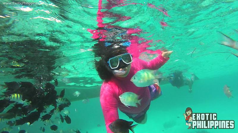 Malcapuya Island Coron Palawan Exotic Philippines