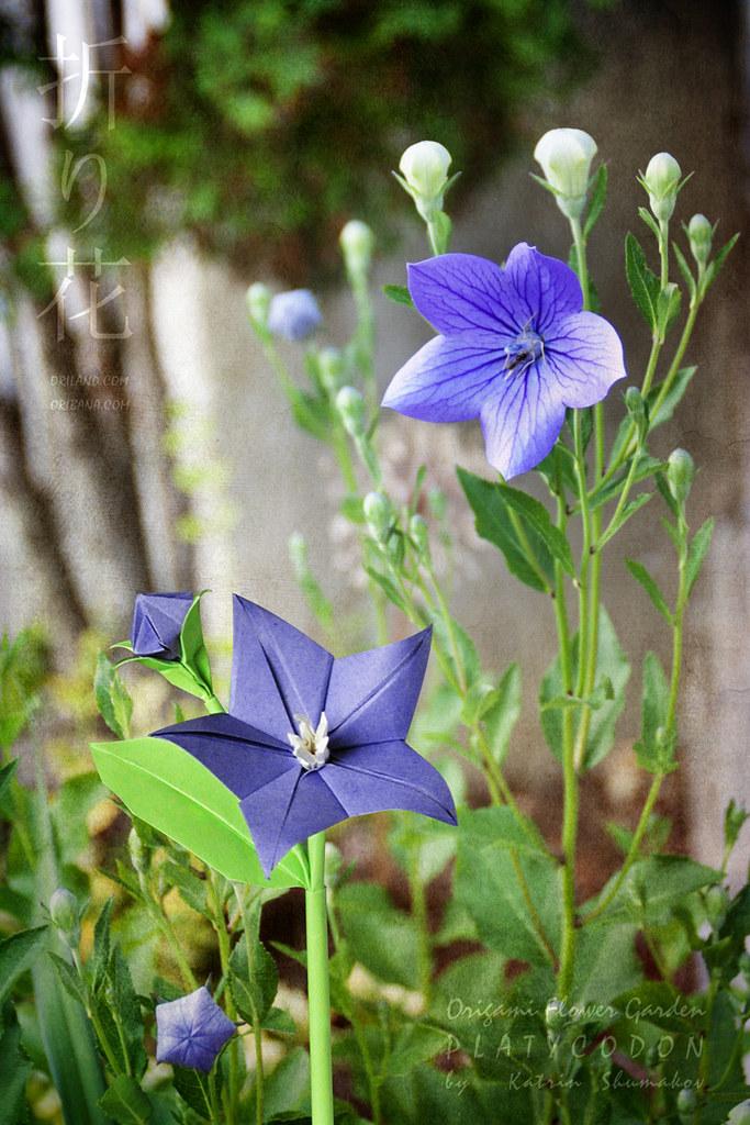 Origami Flower Garden. Platycodon