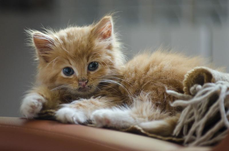 my kitten