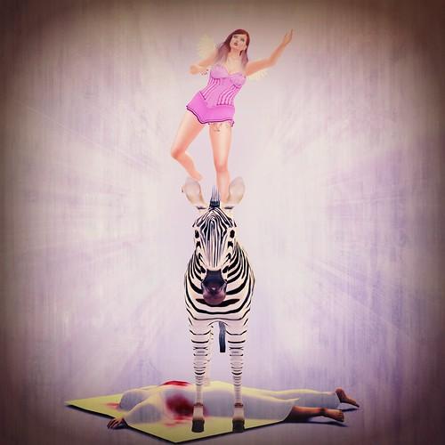 The Zebra Did it