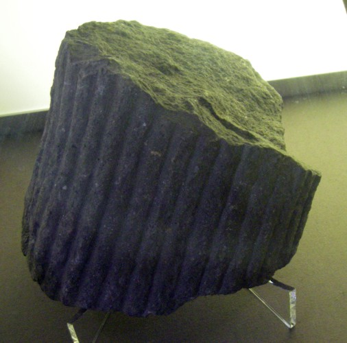 Archaeocalamites scrobiculatus 22195960918_59f5da3f5c_o