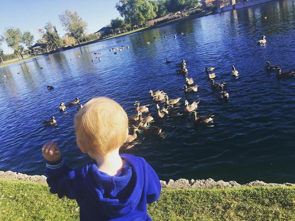 Feeding the ducks by bartlewife