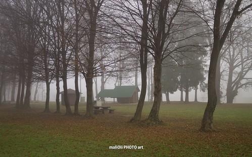 park street city autumn urban tree fall misty fog canon season town europe place foggy croatia hrvatska karlovac