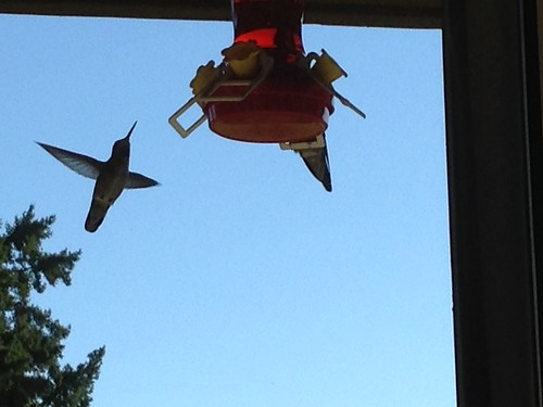 A hummingbird waits in line for the feeder