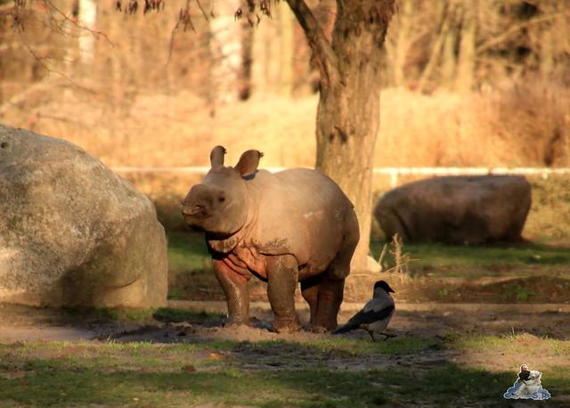 Tierpark Berlin 22.11.2015   0149