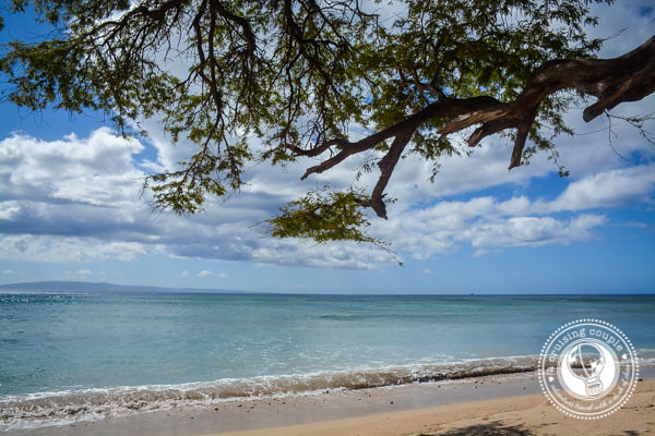 Beautiful Beach Maui Hawaii