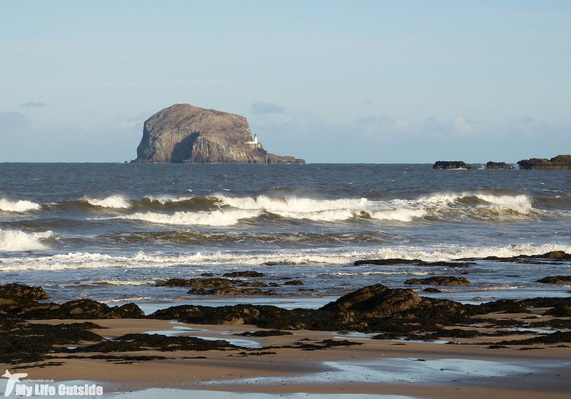 P1160225 - Bass Rock, North Berwick