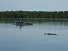 swamp tour fisherman and alligator