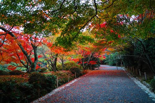 京都:龍安寺