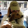 Daisy with In Dog Years I'm Dead hat_FAV