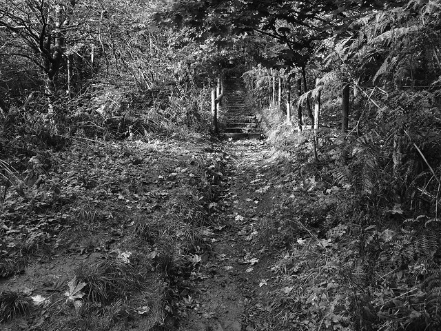 Pathway To the Falls, Nikon COOLPIX L820