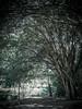 Árvore frondosa by natacia.disantos