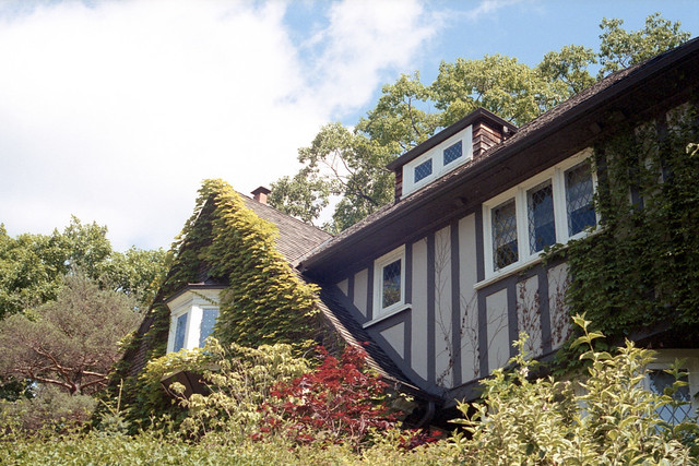 Ivy Covered Tudor