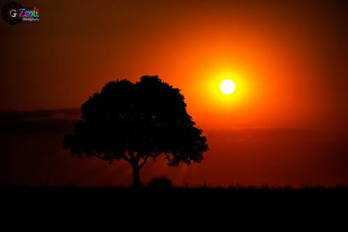 shadow cloud sun tree grass sunshine silhouette safari